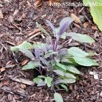 20 Insect Repelling Plants - Simple Life Mom