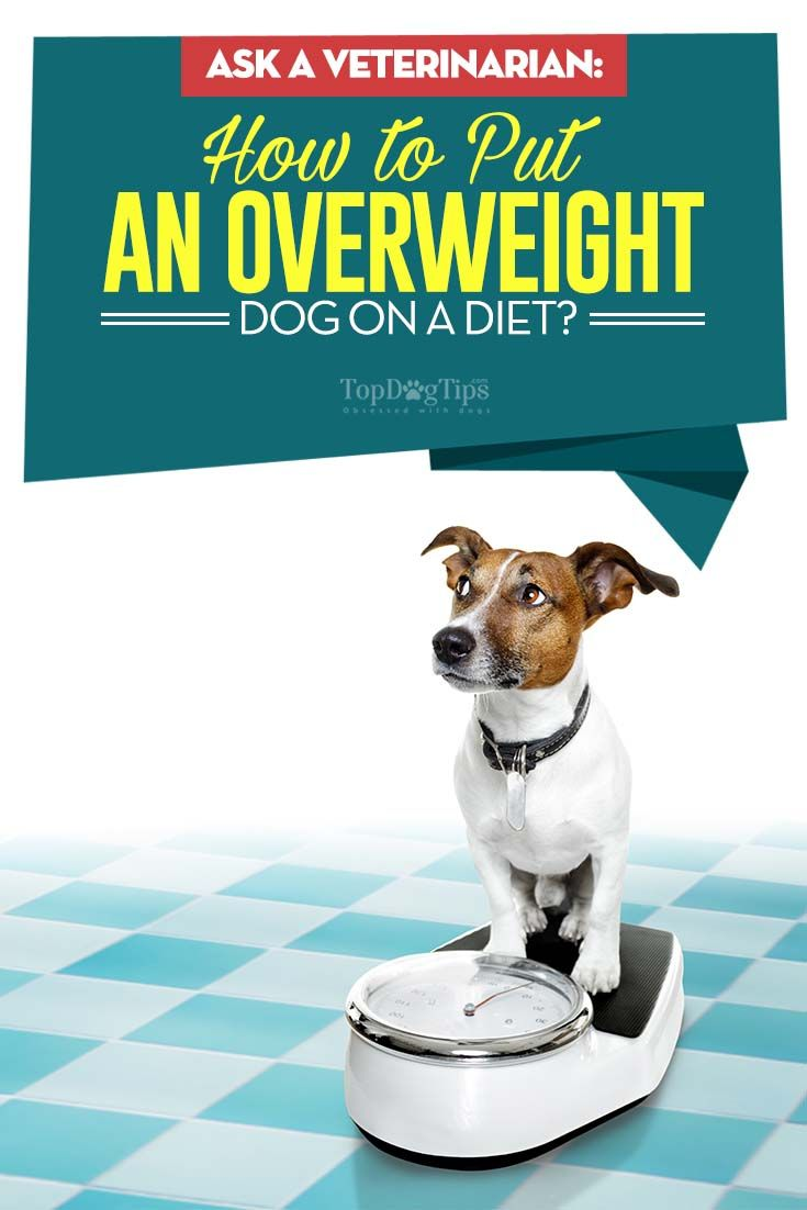 8516d122db6ba72a31f0272d7dcfc717 - How To Get My Overweight Dog To Lose Weight
