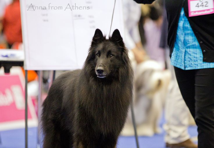 For more photos from the Euro Dog Show, check out the Euro Dog Show board!