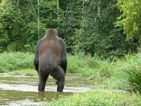 best bigfoot evidence | Best BigfootEvidence