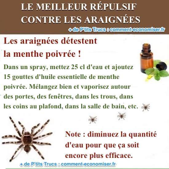 Le Meilleur Répulsif Contre les Araignées (Simple et Naturel).