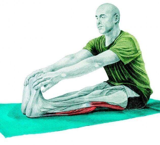 Растягивает подколенные сухожилия и икроножные мышцы.