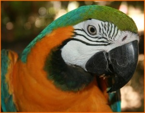 Super concours tout en couleur!    http://rienquedugratuit.ca/concours/voyage-costa-rica-eco-peinture/