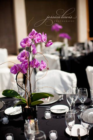 orchid centerpieces for weddings | Kelly Gibbs Wedding on July 3rd Purple Phal orchid centerpiece ...