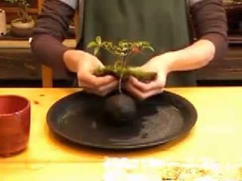Zahrada na niti: Jak vyrobit kokedamu