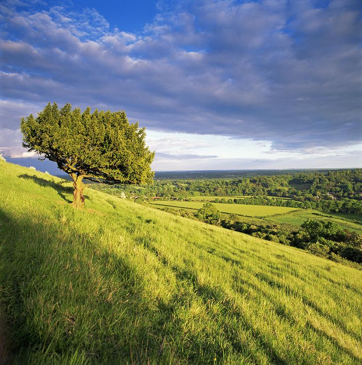 On Box Hill, Surrey Hills, North Downs, Dorking, Surrey, England, Uk ...