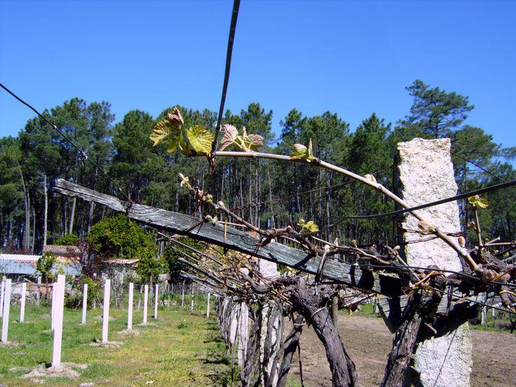 Forma de atado de una vara sobre alambre