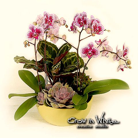 Mixed planter with phalenopsis orchid, succulent and tropical greens