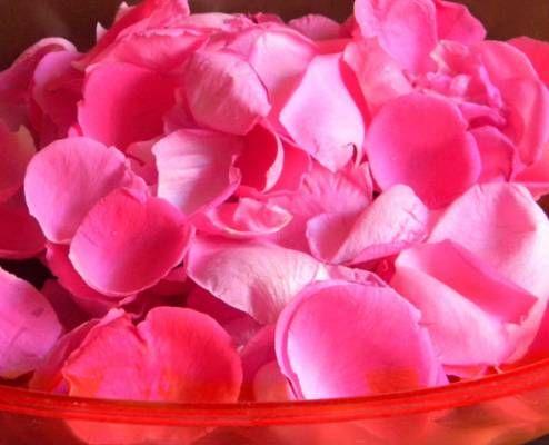 VERO ROSOLIO (ros solis = rugiada del sole, Regno delle DUE SICILIE) 20 petali di rosa  petali di rose rosse o rosa molto profumati  300 ml  di alcol a 95°  300 g di zucchero semolato  300 ml di acqua