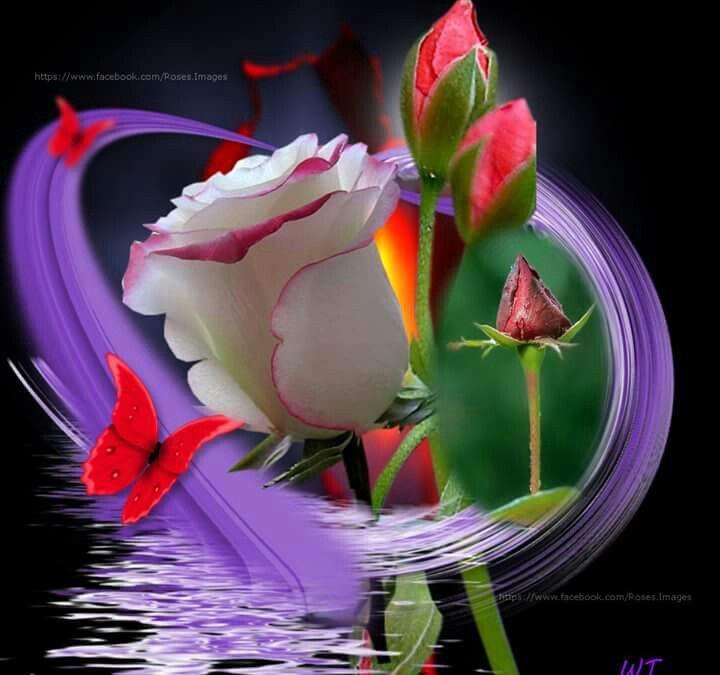 Надписями красном, цветы для ларисы анимация