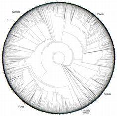 巨大な円形の生物種進化系図ポスター「Tree of Life」(画像) - 涙目で仕事しないSE