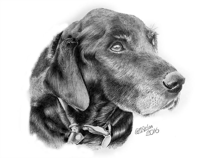 This drawing of a black labrador, called Lucie is a tribute present for her owner. Unfortunately Lucie passed away last year after a longadventure with her owner and the present is to immortalise her and remember what a great friend she was. Here's what the owner said about the drawing … I gotyour portrait of…