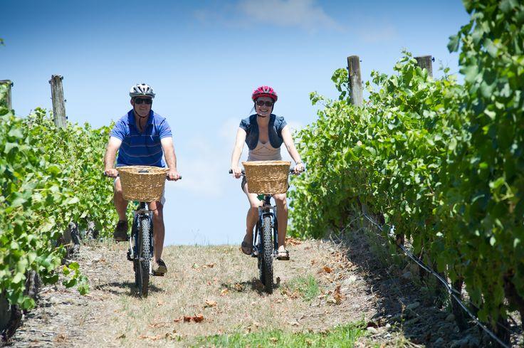 Cycle the Martinborough vines