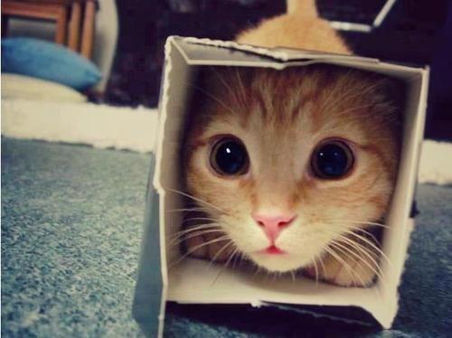 mrow.: Kitty Cat, Funny Cat, Cute Cat, Milk Cartons, Big Eye, Funny Animal, Peekaboo, Peek A Boo, Silly Cat