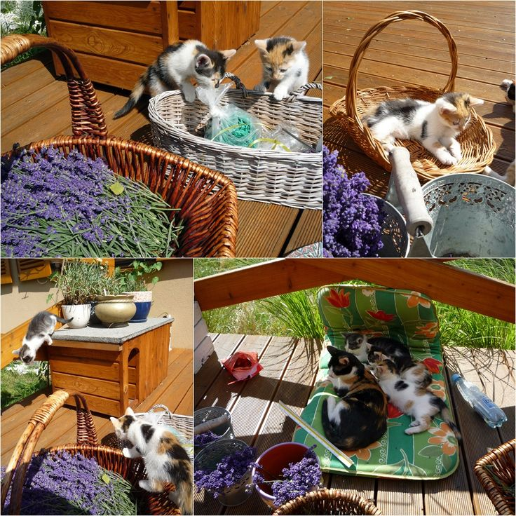 little helpers during the second lavender harvest. :)
