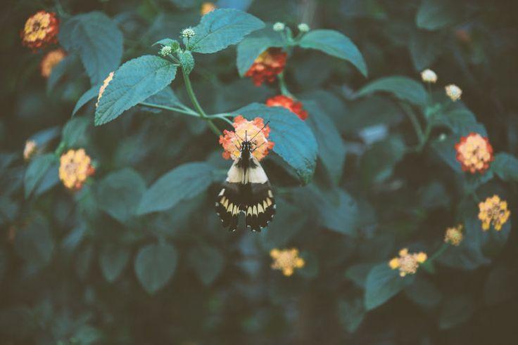 Botanic Project | LAR - Laurie-Anne Roux Photographe