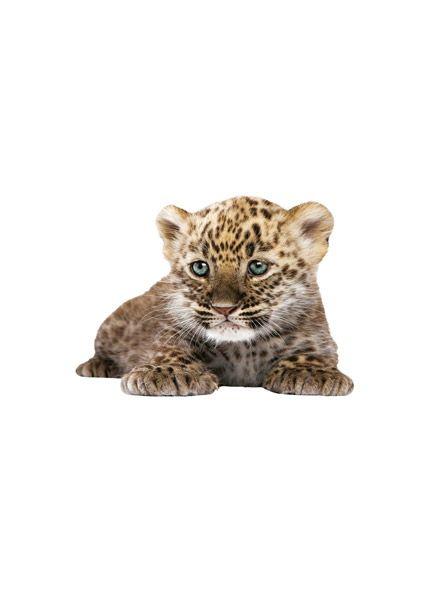 Muurstickers dieren leeuw zwarte panter luipaard en lynx Safari Friends SET 1.