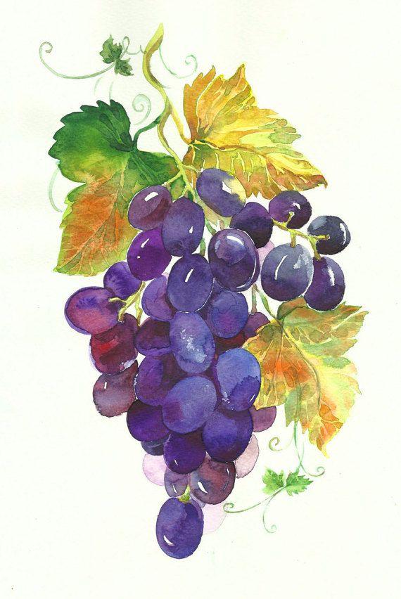 Bunch of grapes watercolor illustration by MarinaMarkizova on Etsy