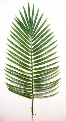 Artificielles - Feuille de palmier phoenix h 66 cm plastique pour exterieur d 27 cm superbe