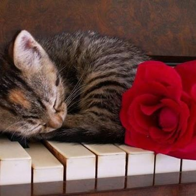 """""""There are two means of refuge from the miseries of life: music and cats."""" --Albert Schweitzer"""