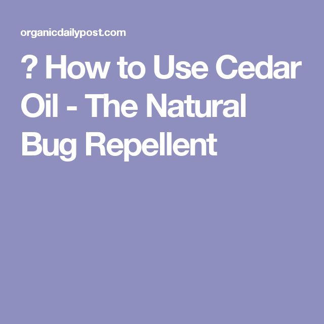 ▷ How to Use Cedar Oil - The Natural Bug Repellent