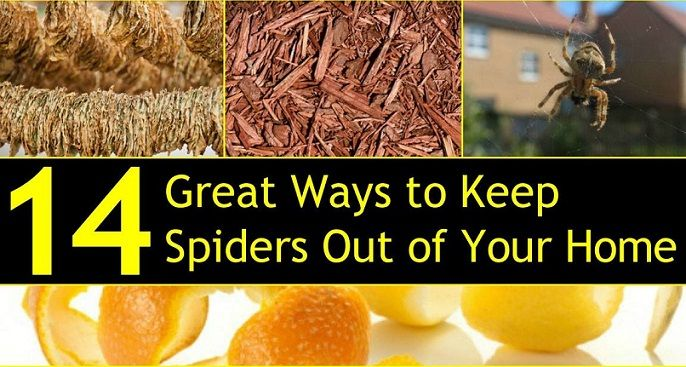 Natural spider natural ways to keep spiders out of your for How to keep spiders out of your house