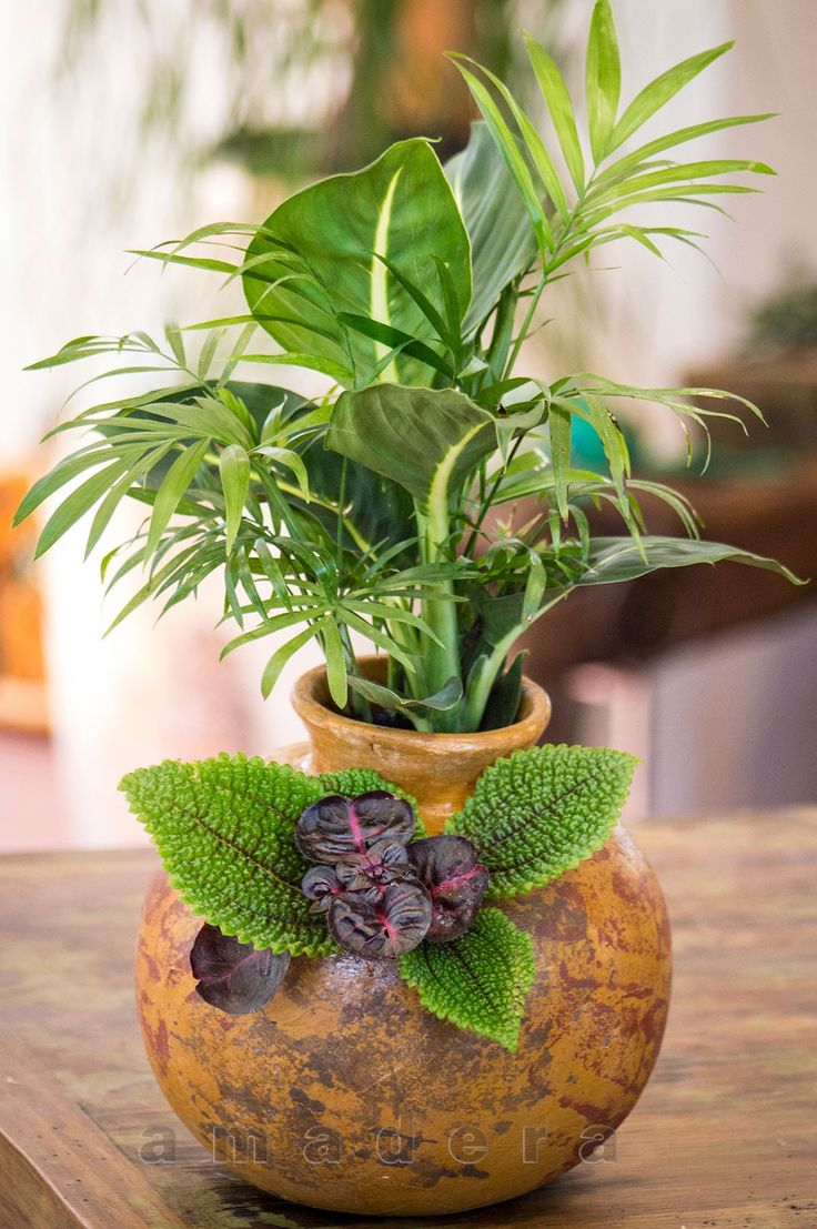 Une ambiance végétale pour votre maison, quelques belles plantes d'intérieur dans un écrin de ...