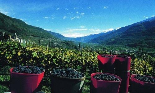 Valtellina Superiore - Alla prima edizione del Grappolo d'Oro, per scoprire le migliori etichette della valle