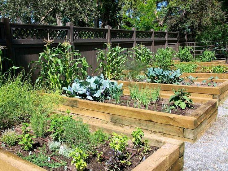Ide buah dan sayuran untuk taman minimalis desain rumah for Vegetable plot ideas