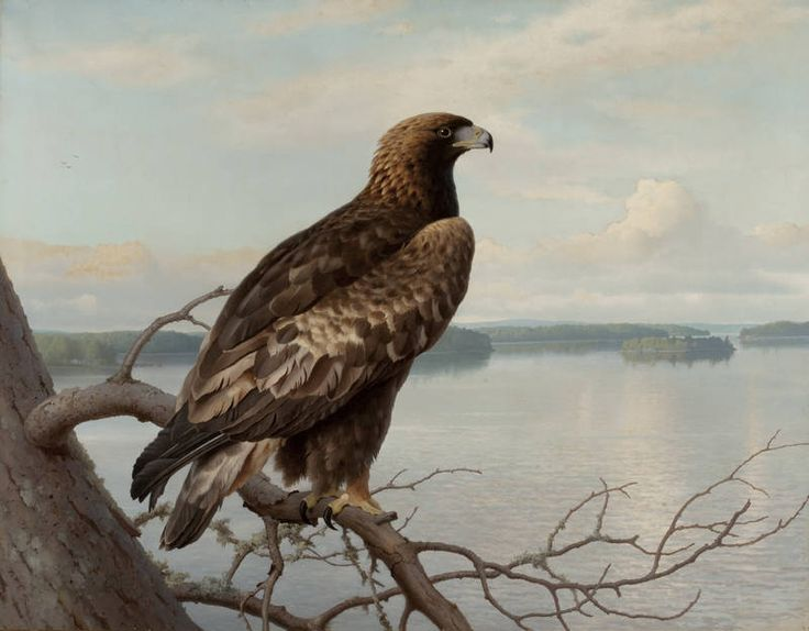 """""""Golden Eagle by a Lake"""" - """"Kotka järven rannalla"""", 1897 – oil on canvas – Ferdinand von Wright (1822-1906)  - Ateneumin taidemuseo"""