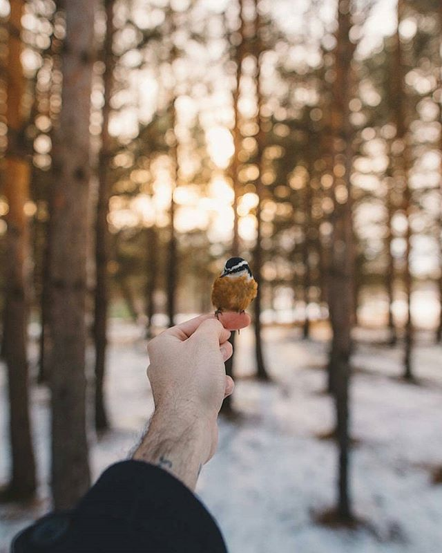 Birds Hill Provincial Park You can call @austin.mackay the Bird Whisperer. .uite