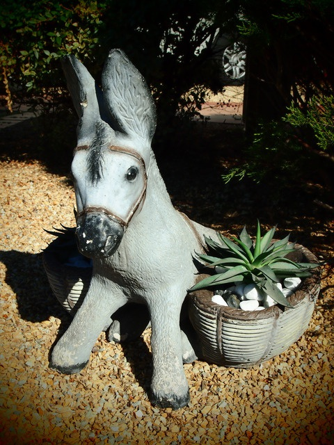 1000 Images About Donkey Planters On Pinterest