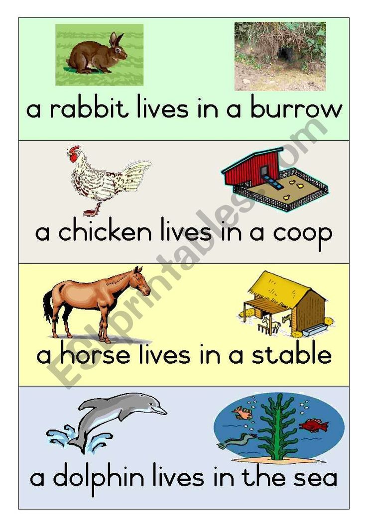 learning about animals for kids worksheets Google Search