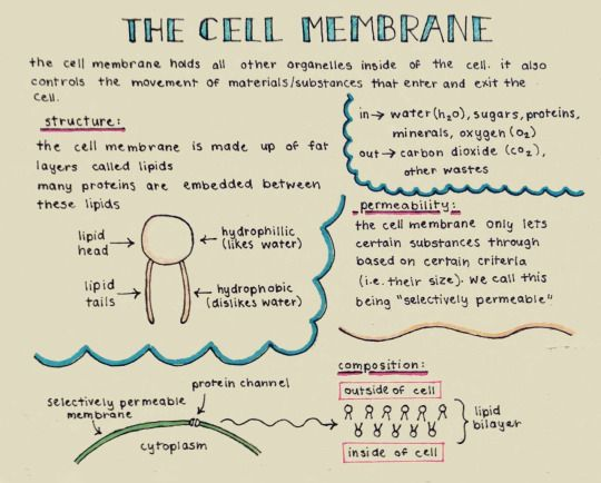 ap bio essay cell membrane C the roles of proteins in membrane structure and transport of ap biology exam essay (free response) questions ap biology exam essay (free.