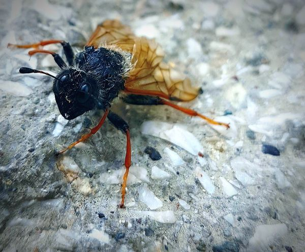 Animals In The Wild Insect One Animal Animal Themes Animal Wildlife Close-up Day Outdoors No People Nature Bug Insect Photography Insects Collection Fly Fly Insect Bug Wings Little Tiny Insects Yellow Orange Black Awesome_nature_shots First Eyeem Photo Nature