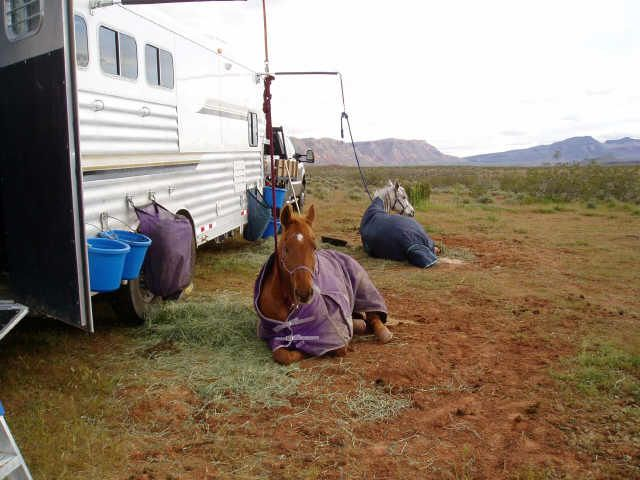 Endurance horse training basics: Camping while tied or confined overnight.