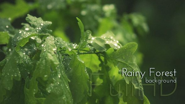 Summer Rainy Forest Video Footage by cinema4design, see preview and more from summer nature video collection.