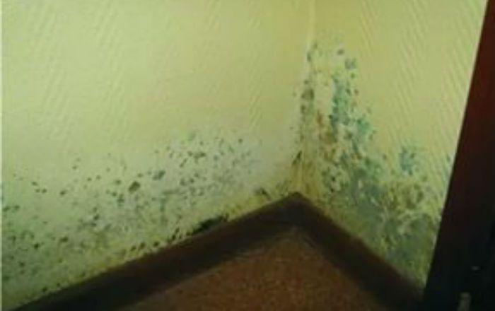 Mucegaiul este de fapt o ciupercă ce poate apărea în locurile umede şi întunecate din casa ta, fiind de foarte multe ori extrem de dificil de înlăturat. Sunt sigur că foarte mulţi vă confruntaţi cu aceste probleme şi de cele mai multe ori apelaţi la soluţii chimice, destul de periculoase, soluţii care pe lângă faptul …