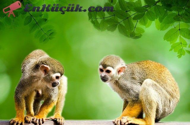 amazon ormanlari hayvan cesitleri