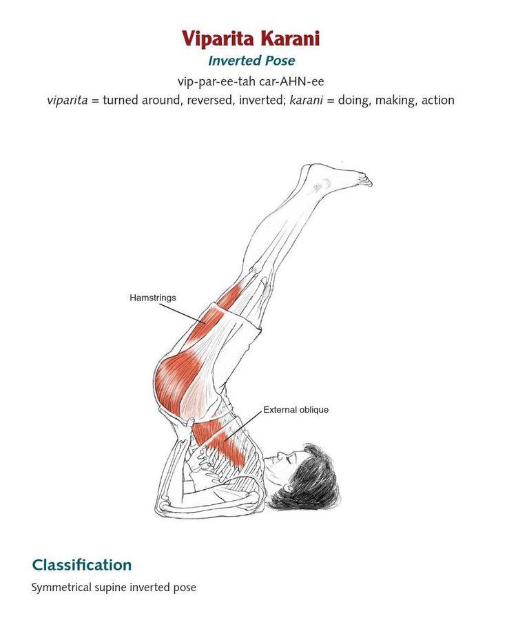 Fantastisch Anatomie Der Yoga Posen Bilder - Anatomie Ideen ...