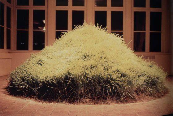 Hans Haacke - Grass Grows - 1969