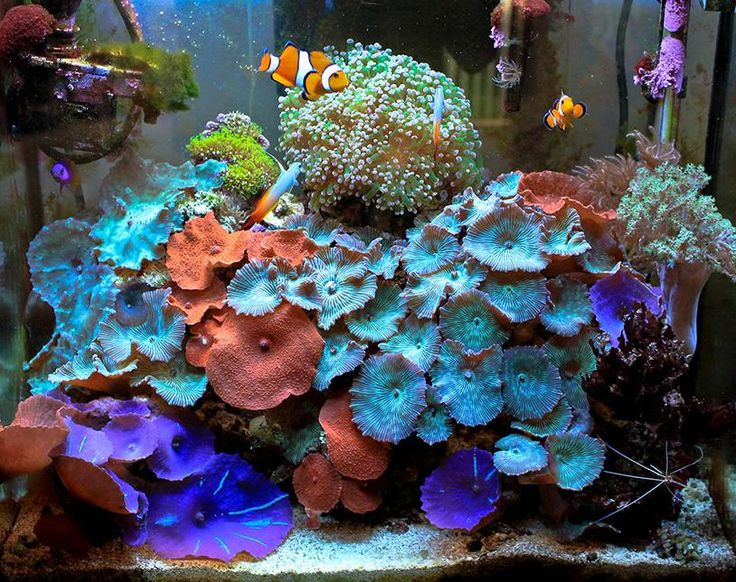 17 best ideas about small saltwater tank on pinterest for Small saltwater fish tank