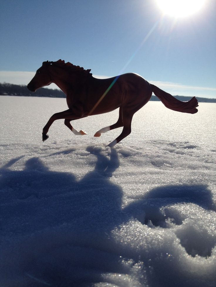 Breyer Horse on Snow Landscape_Photographed by Sydney Free