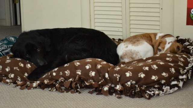 DIY Dog bed.  I made two but they love to share the big one :-)
