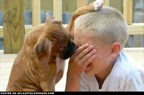 Boxer Comforts Boy - A Place to Love Dogs