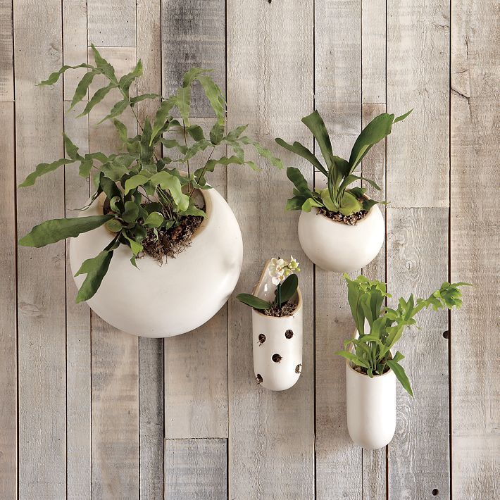 For my orchids.: Power Ceramics, Shane Power, Wall Vase, Herbs Gardens, West Elm, Wall Gardens, Wall Planters, Ceramics Wall, Hanging Gardens