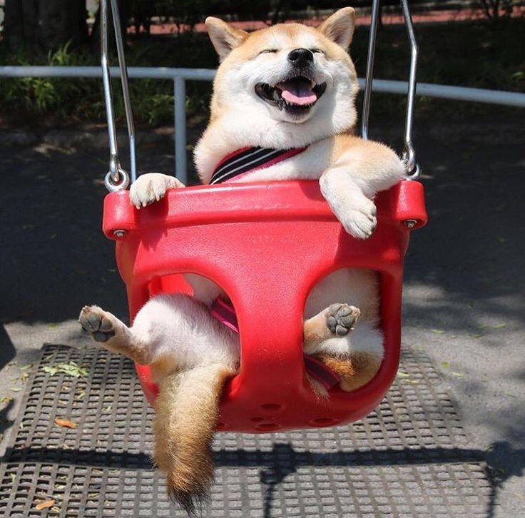 Doggo does a swing