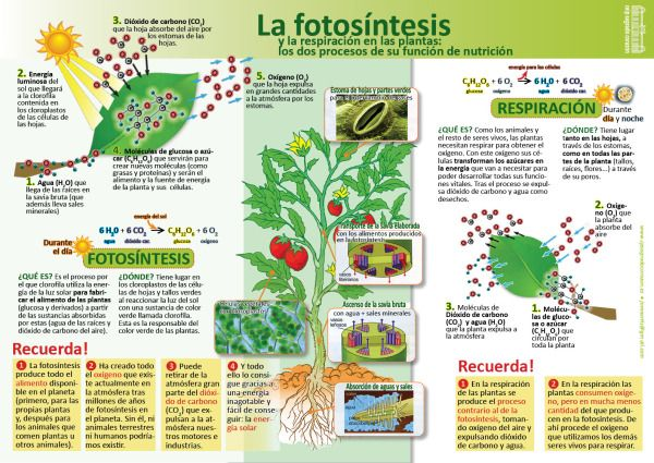 C.Nat.03-La fotosíntesis