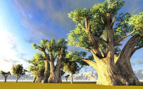 I profumi dell'artigianato africano. Baobab africani