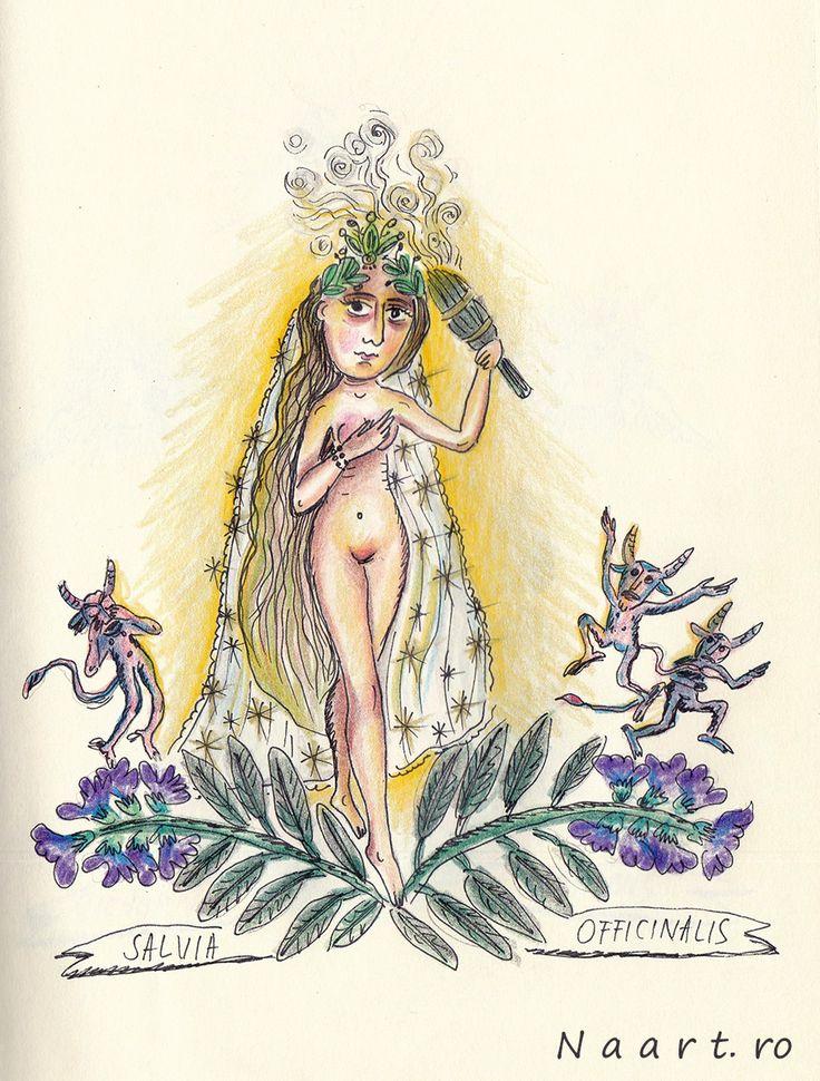 Salvia Officinalis #sage #folkart #naart.ro